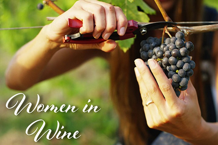A woman trimming grapes off the vine, with text